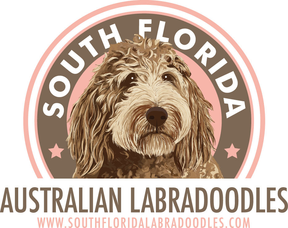 South Florida Australian Labradoodles