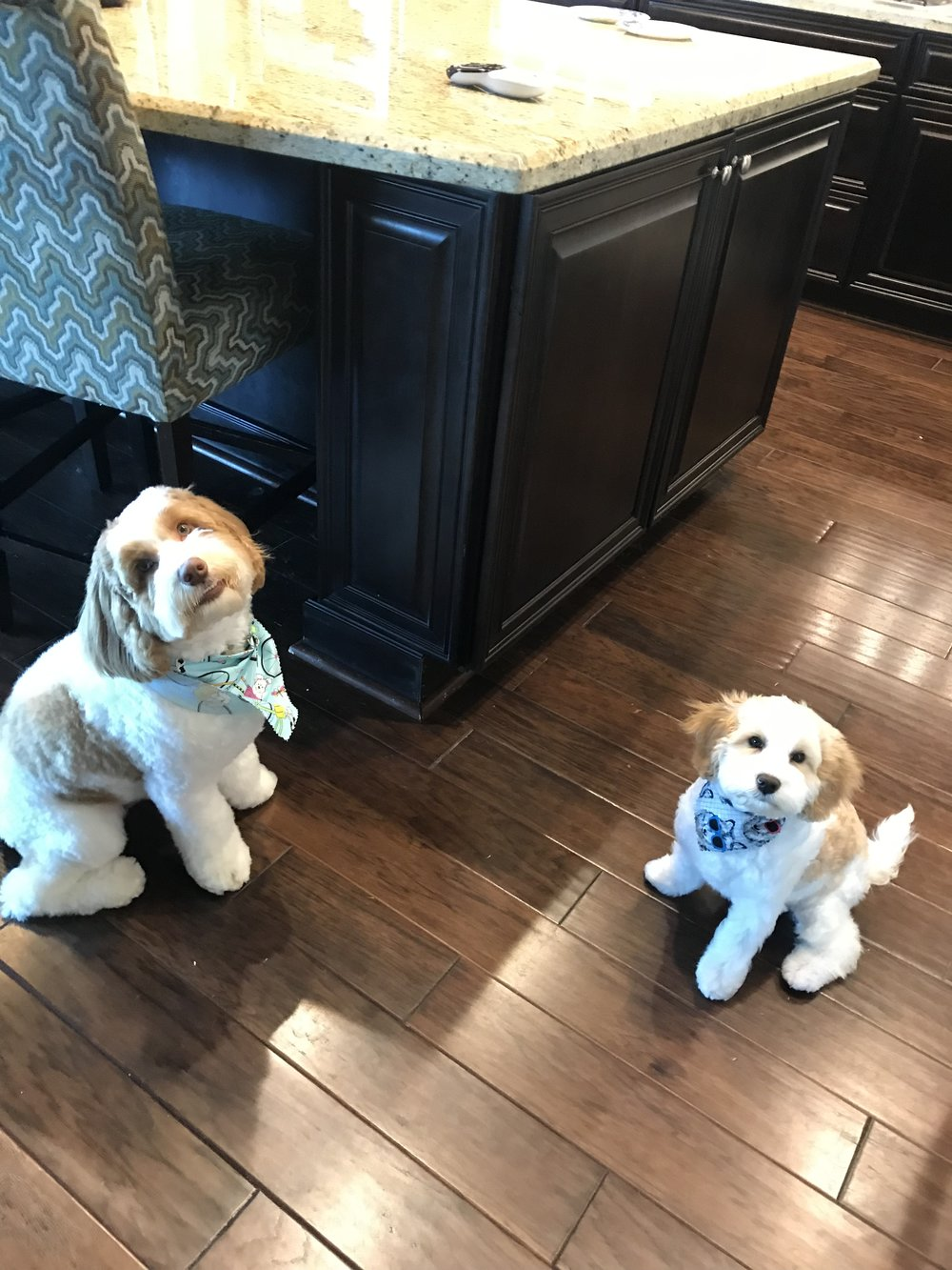 Buddy and Bella living in Wellington, Florida