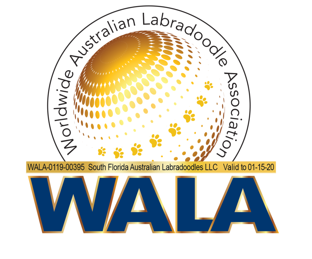 South Florida WALA Logo-0219-00395.png