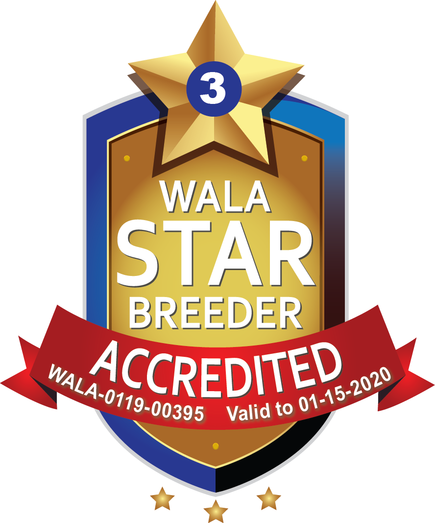 South Florida WALA Star Logo.3.00395.png