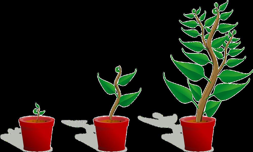sapling-grow.png