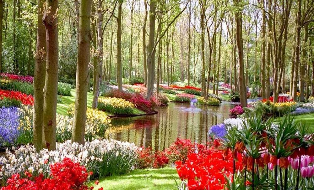 What A Great Picture Of A Flower Garden. The Reason We Love This Picture Is  Because Nature Is A Part Of Us, Observing Its Beauty Is More Beneficial  Than We ...