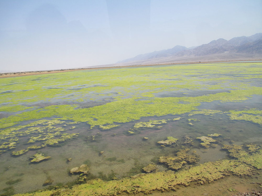 Salt marshes in the Holy Land