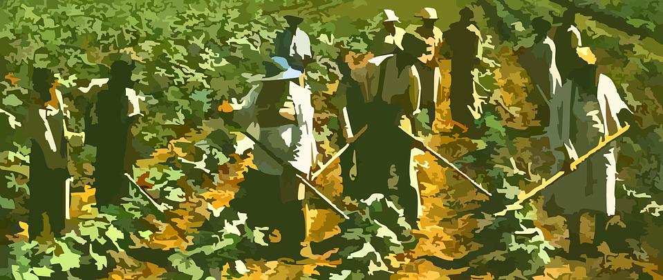 farming-42133_960_720.png