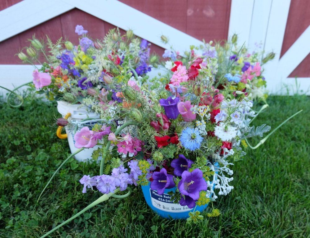 Local flower bouquets with campanula, nigella, larkspur, snapdragons, and garlic scapes