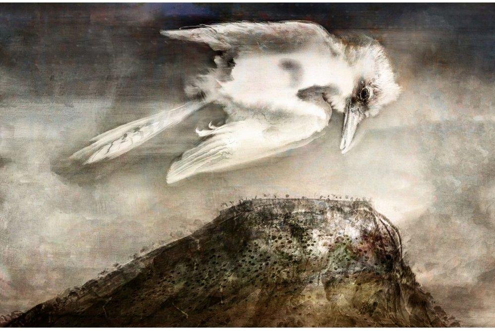 Kookaburra-1-1434x960.jpg