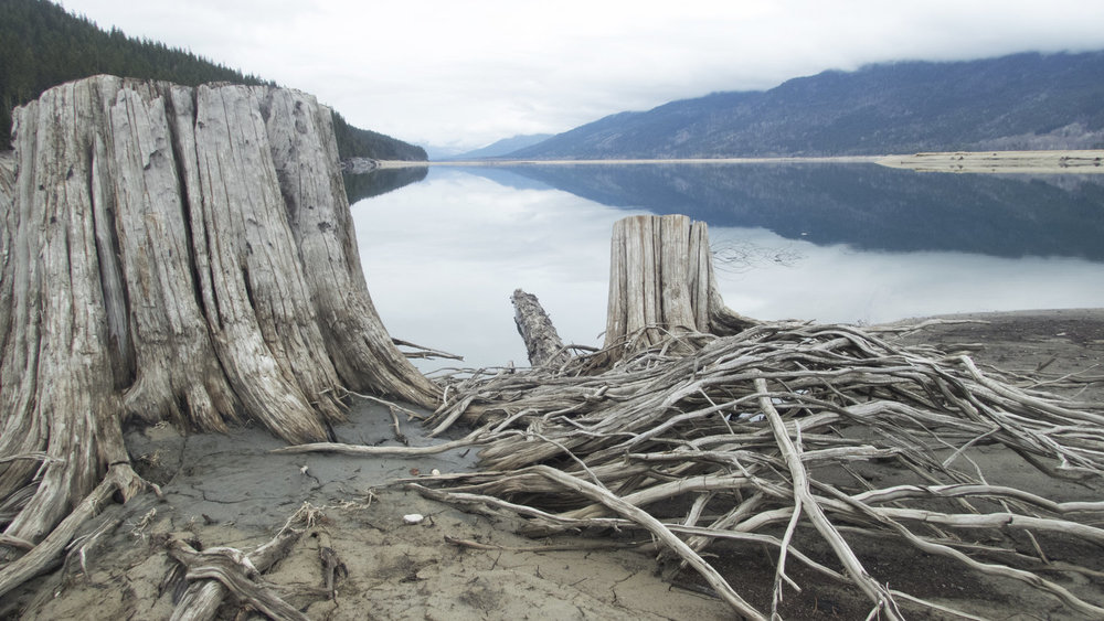 Genevieve Robertson - video - art - Columbia River