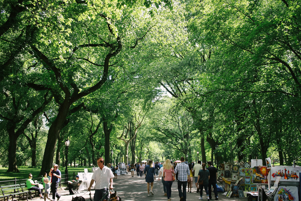 What to Do NYC Travel Guide Travel Tips New York City Central park
