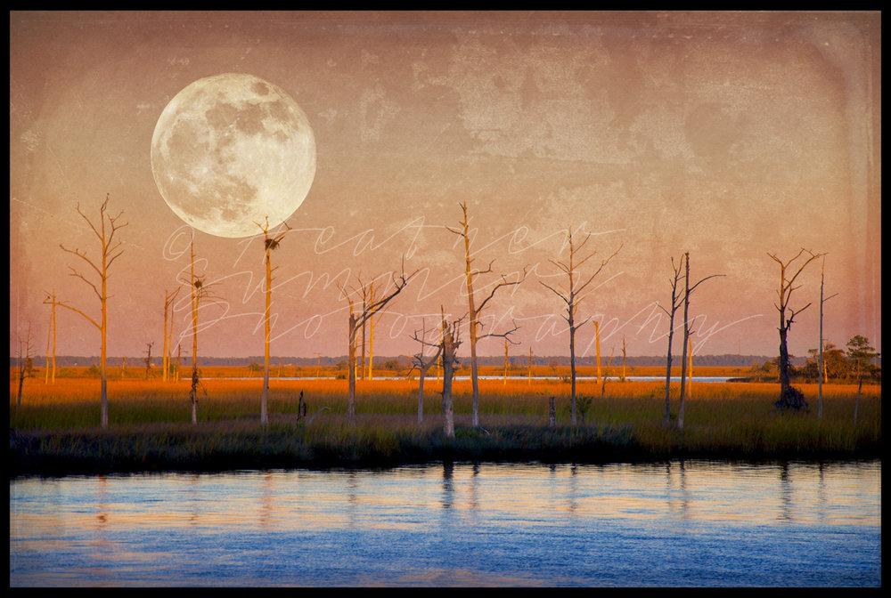 """""""Lunar Marsh"""""""