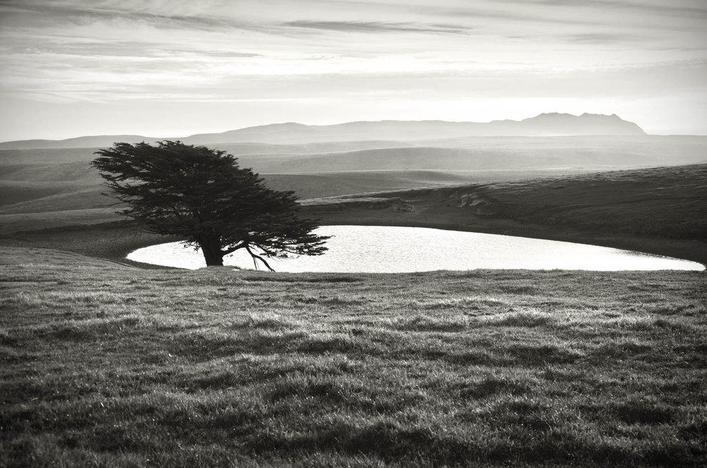 """Cypress Pond"""