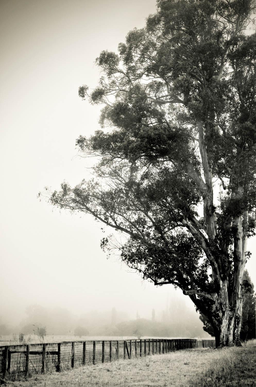 """Eucalyptus Path"""