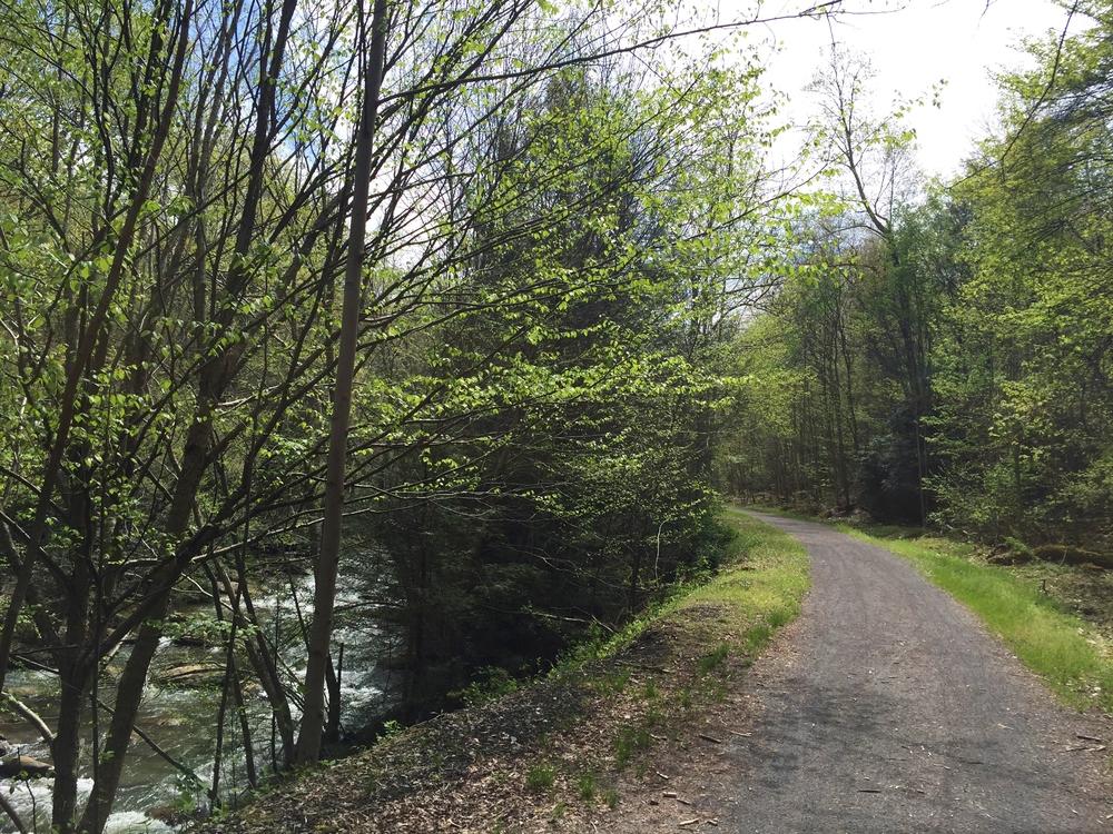 Decker's Creek running along the trail.