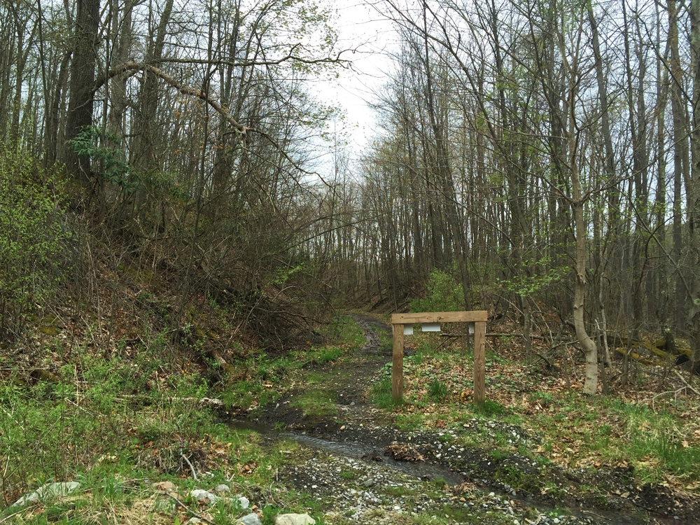 Current end of the Decker's Creek Trail. I've gone a little further before, but this time it was just too swampy.