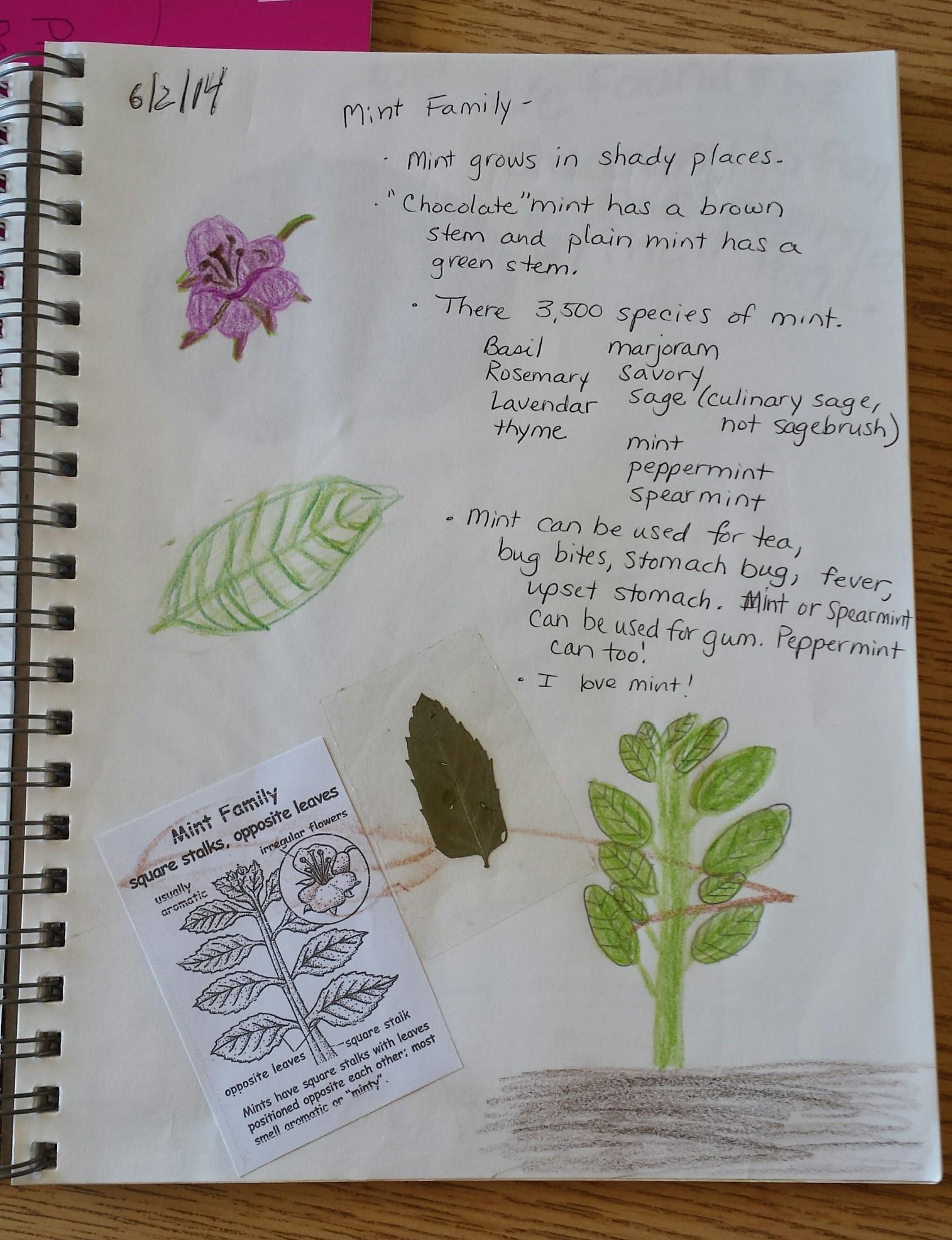 nature journal shanleya