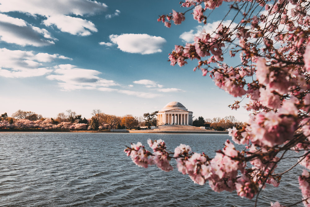 Cherry BlossomBloom - A Weekend in Washington, D.C.