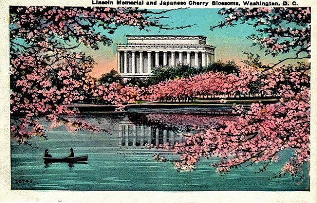 Spring is quickly approaching, book your spot for the Cherry Blossom Bloom now!