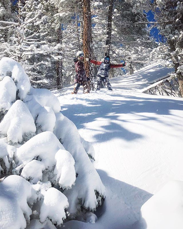 Tree runs and powder all day 💙 📷: @rideavik  @coalitionsnow