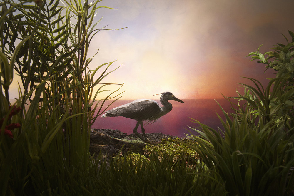 Heron (unframed)