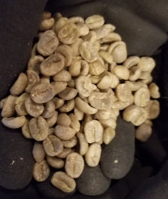 1 - 1 - Panama Carmen Estate 2017 December 01 - Green coffee Myra.jpg