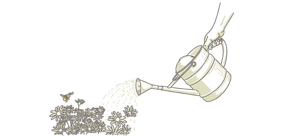 garden bee pot.jpg