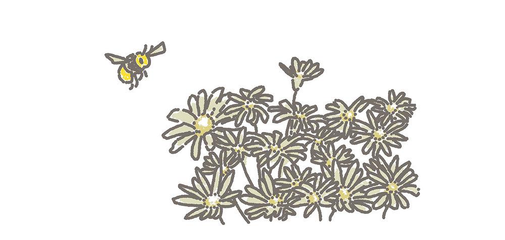 garden bee.jpg