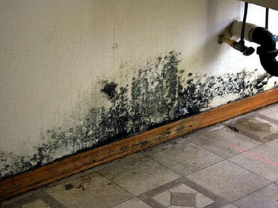 Mold-Remediation-2.jpg