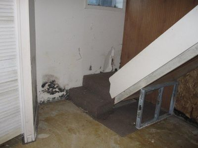 normal_Basement_Mold_Before.jpg