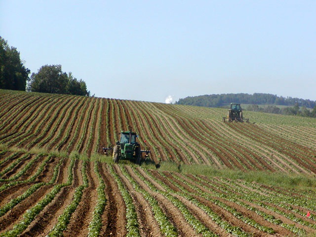 A monoculture of potatoes By NightThree, CC BY 2.0,