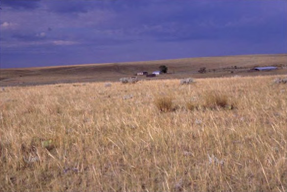 Much of the feed produced for animals is produced in monoculture, with the same crop as far as the eye can see.