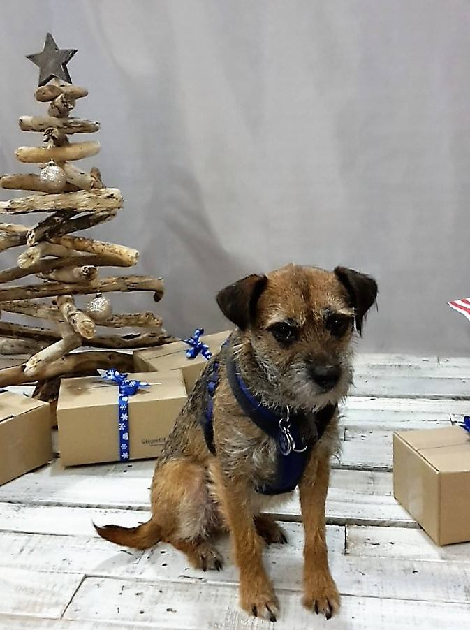 Christmas gifts and presents for dogs