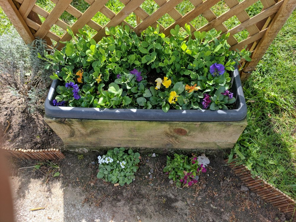 Wildlife Garden, Pallet Ideas, Pallet Planters, Ginger&Browns Pet Shop near Northwich