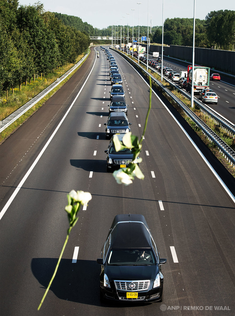 Witte rozen vallen terwijl de colonne van lijkwagens met slachtoffers van vliegramp MH17 vanuit Eindhoven Airport over de A2 richting Hilversum passeert.