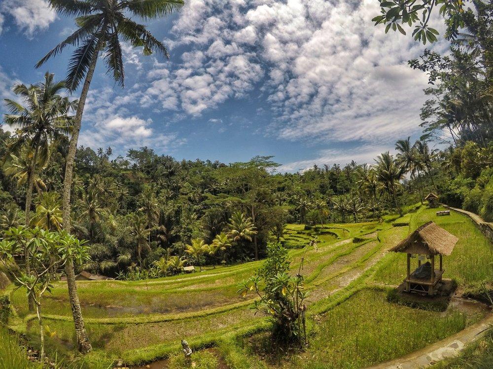Views when talking to Gunung Kawi Temple