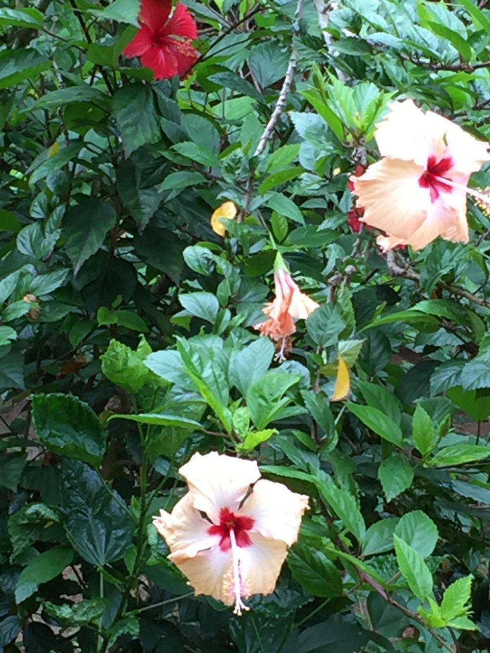 3 Birds,buttrflies & Flowers.jpg