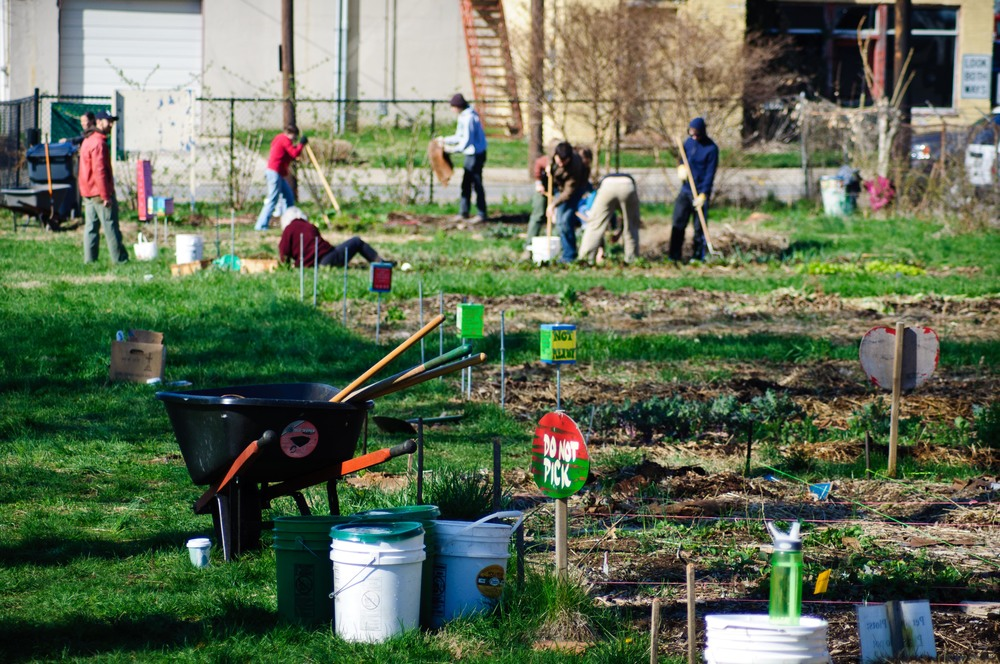 There are countless ways to earn your volunteer hours for Master Gardener certification.
