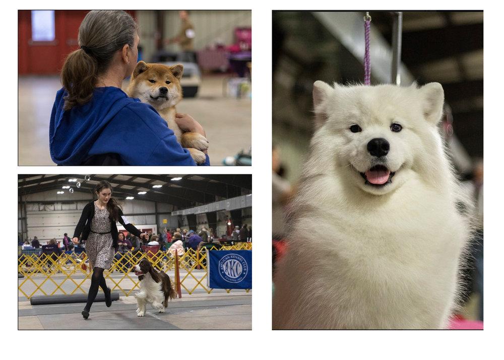 114th Annual Rock Creek Kennel Club All-Breed Dog Show