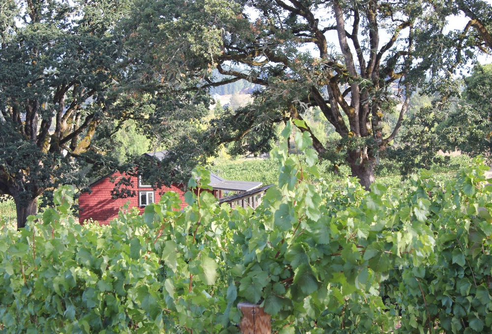 bennett-vineyards-farmhouse-summer.jpg
