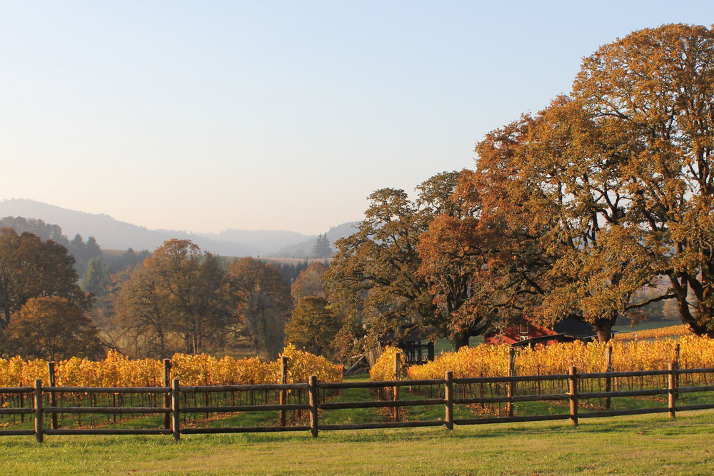 bennett-vineyards-farmhouse-fall.jpg