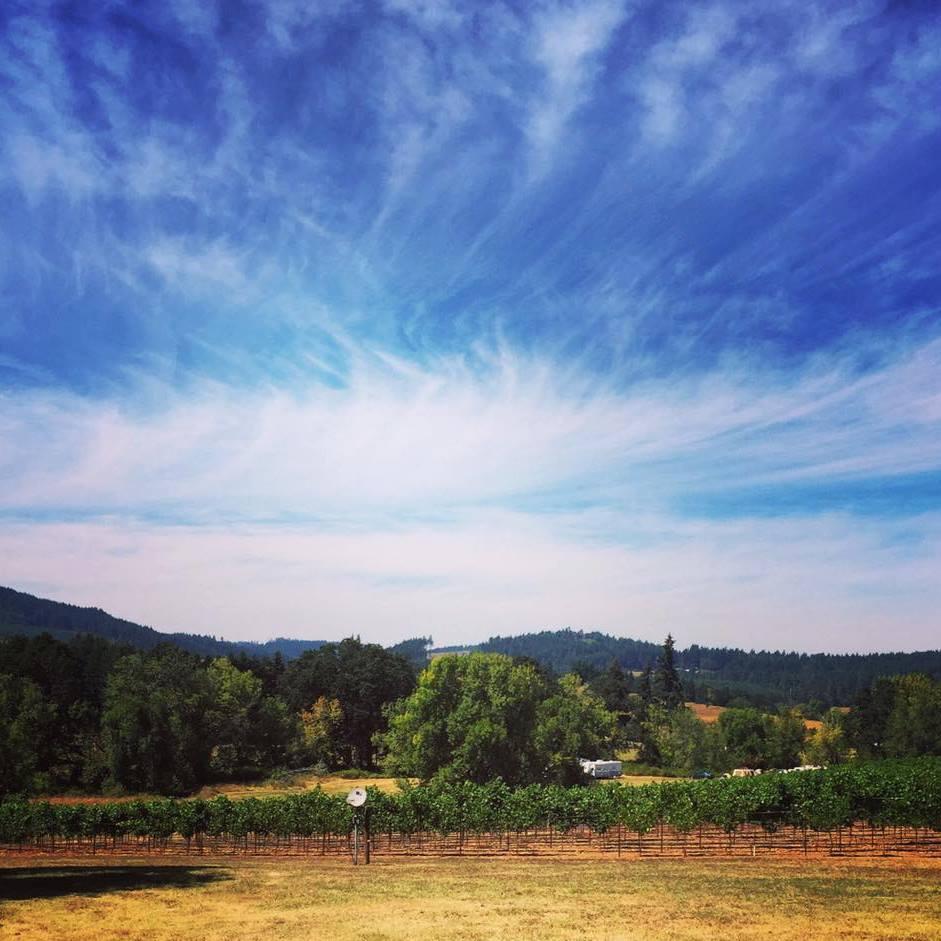 wine-camp-2016.jpg