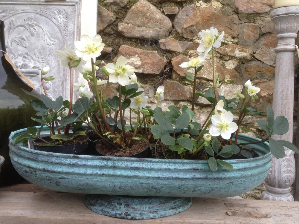 Vintage Plant holder with hellebore     The decorative items are sourced from around the world, from auctions, antique fairs and salvage yards