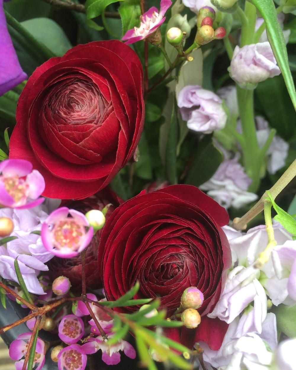 Ranunculus and wax flower