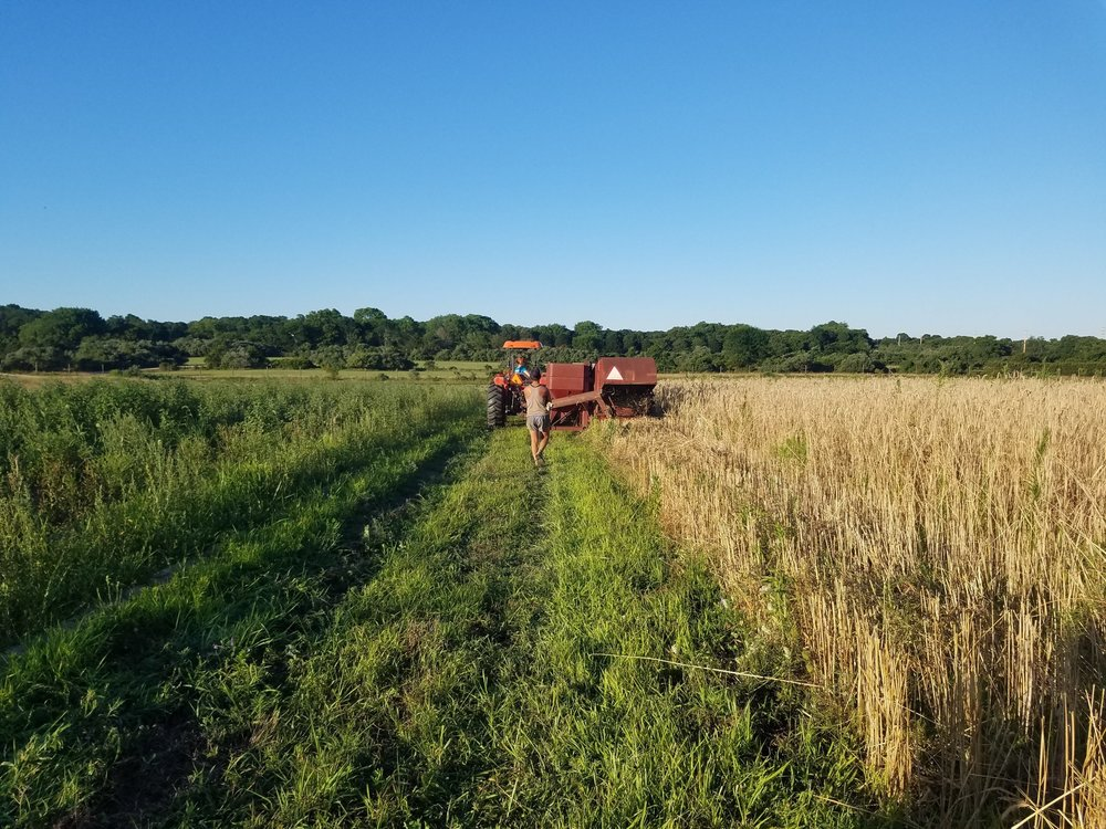 FARM + CSA -