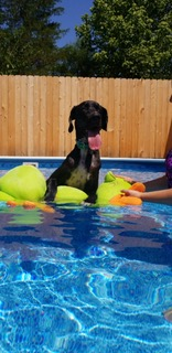 STORMY (AKA ZOEY)   - JUNE 2018   Stormy enjoys relaxing in the pool with his new family.