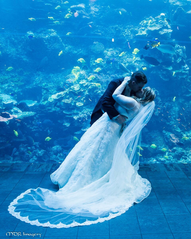 Ashleigh + Joe | GA Aquarium | Floral + Event Coordination