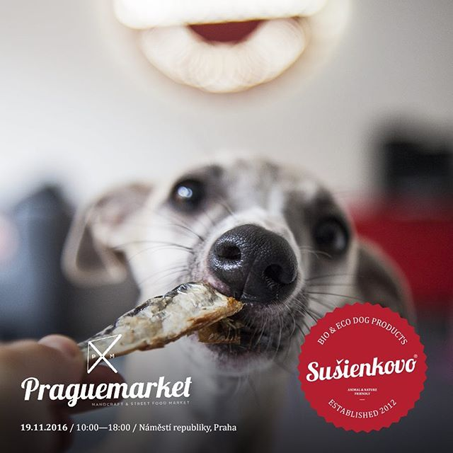 Chlpáči, až půjdete dnes na procházku, nezapomeňte se stavit za náma na pořádný stejk nebo vyčmuchat naše novinky🐶🍂 #praguemarket #susienkovo #healthydogbakery #handmade #dog #doglover #welovedogs #bio #eco #prague #weekend #autumn #market #namestirepubliky #czechdogs #slovakiadogs #cloud7prague #chlpaci www.cloud7shop.cz & www.susienkovo.cz💕