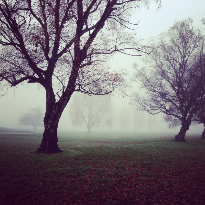 mistytrees.jpg