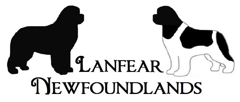 Lanfear Newfoundlands