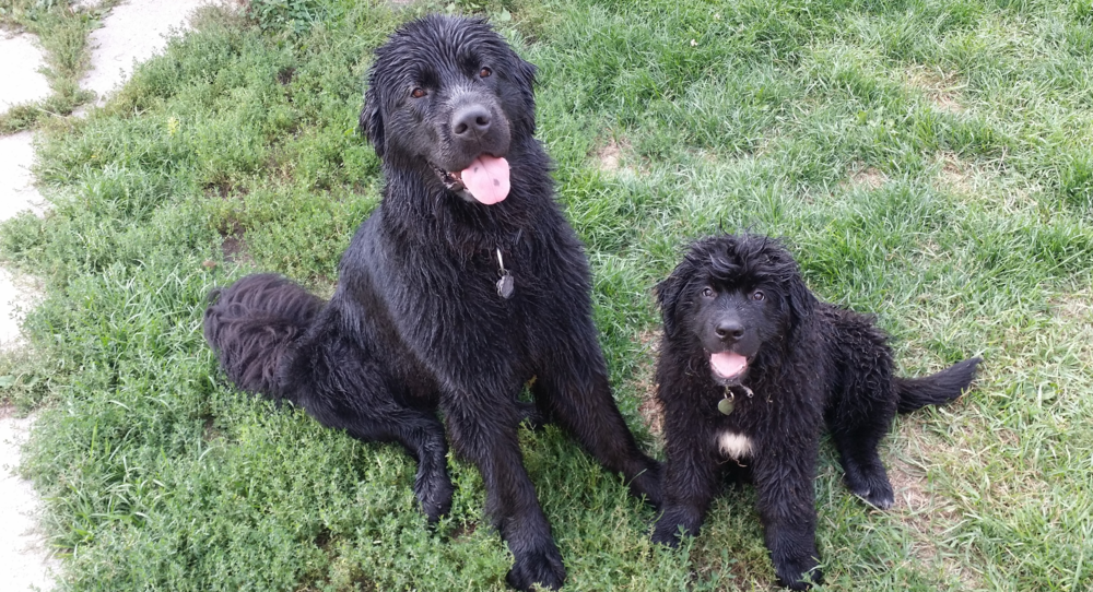 HAPPY DOGS! lANFEAR AND sYLPHRENA, AFTER PLAYING IN THE KIDDIE POOL
