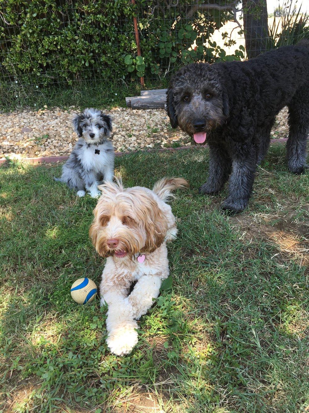 Dogpanion Puppy Boarding School Dogpanion Private Dog Training
