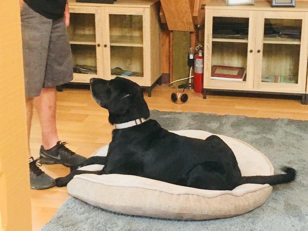 Private Dog Training 1